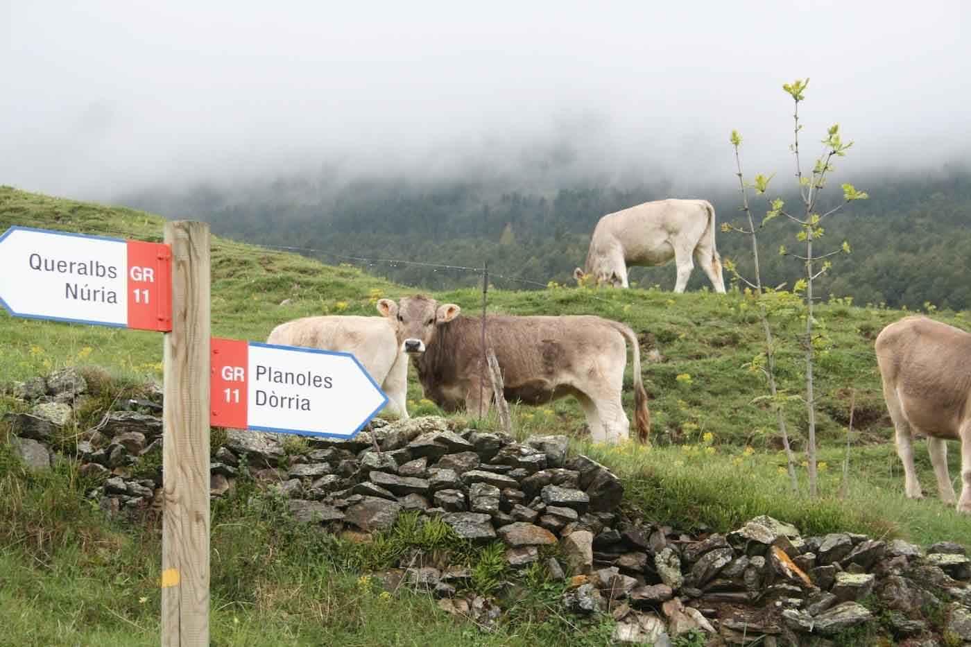 Viaje Pirineos Trail