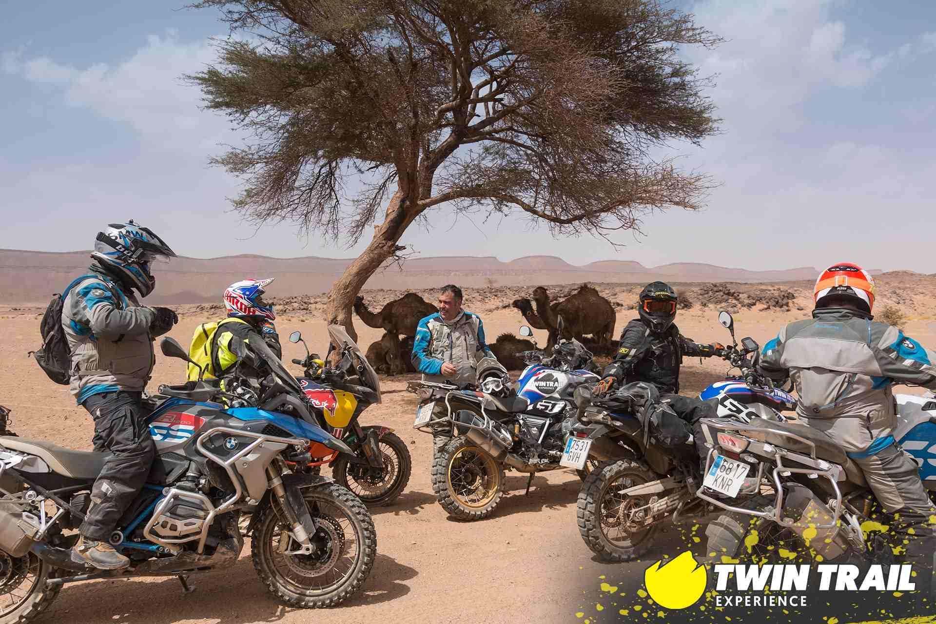 grupo-camellos